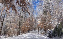 Snow day update