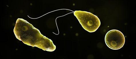 Six year old boy dies from brain-eating amoeba